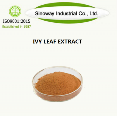 IVY LEAF EXTRACT fournisseur -Sinoway